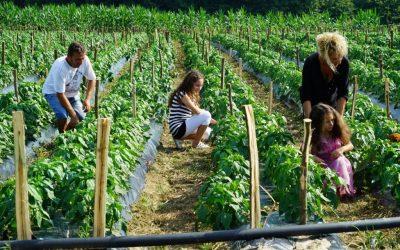 Dvadeset miliona eura pomoći Evropske unije za poljoprivredno-prehrambeni sektor u BiH